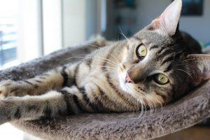 faire-garder-son-chat-pendant-les-vacances