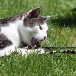 conseils pour chat