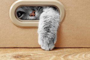 Accessoires pour chat