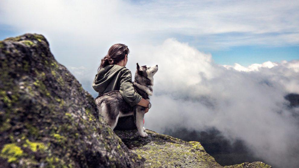 Assurer un chien sans identification